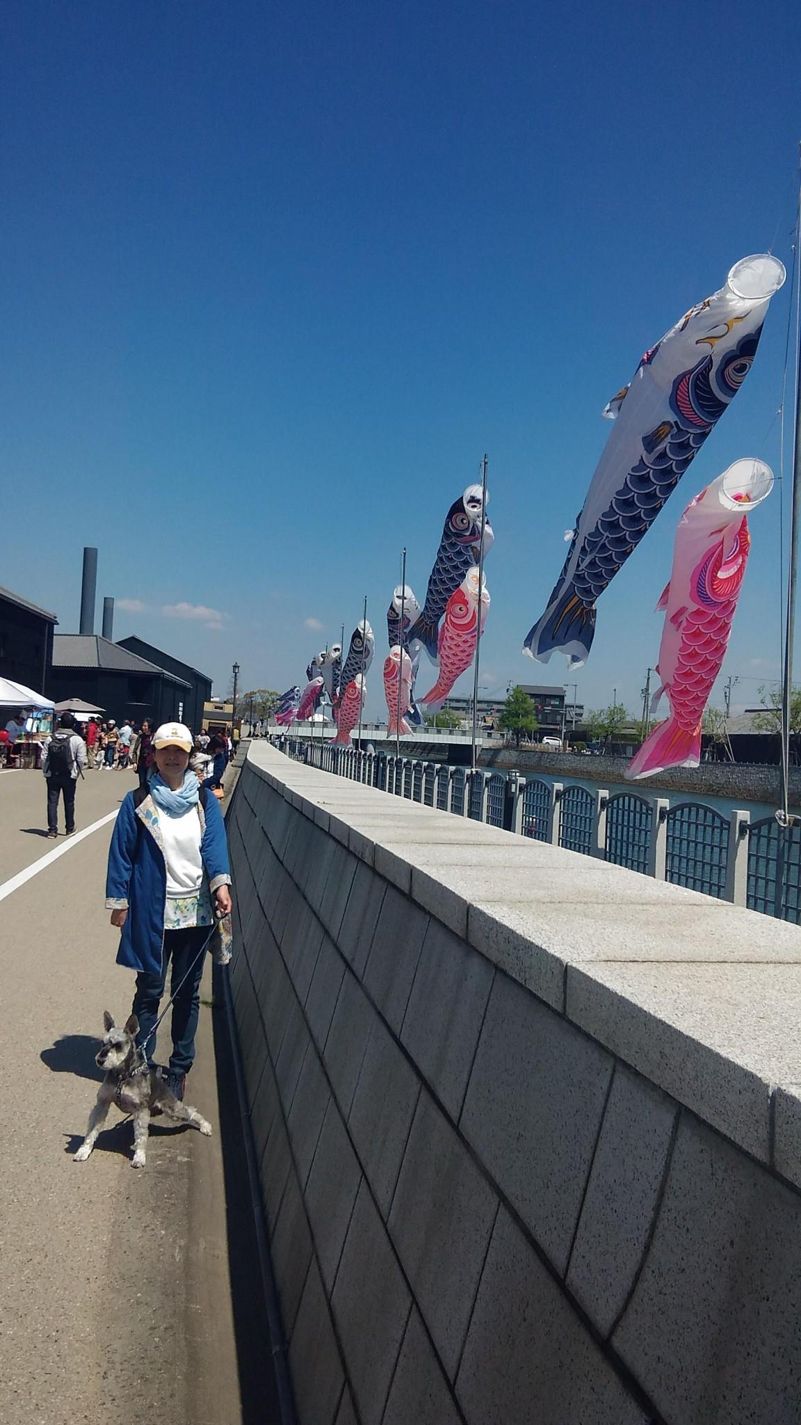 愛知県半田市 半田運河 鯉のぼり, Carp Stream at Canal in Honda city Aichi prefecture Japan